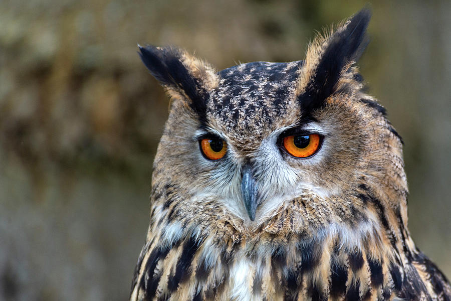 Owl eyes by Cliff Norton