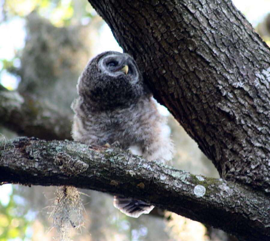 Owl Gazing by Anita Parker