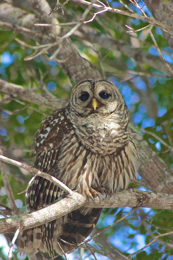 Owl II by Jon Reddin