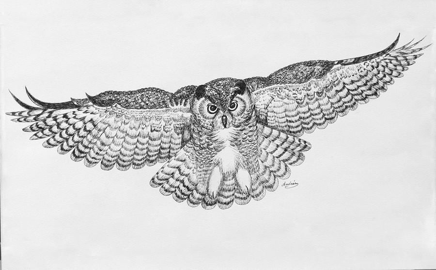 Owl In Flight Drawing by Carol Nistle
