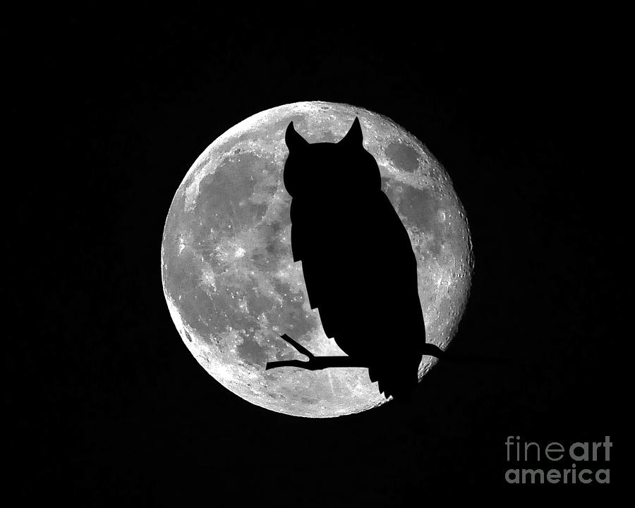 Full Moon Photograph - Owl Moon by Al Powell Photography USA