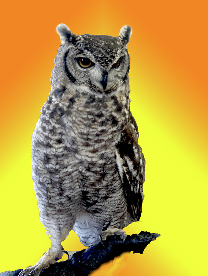 Places Photograph - Owl On Branch by Michael Riley
