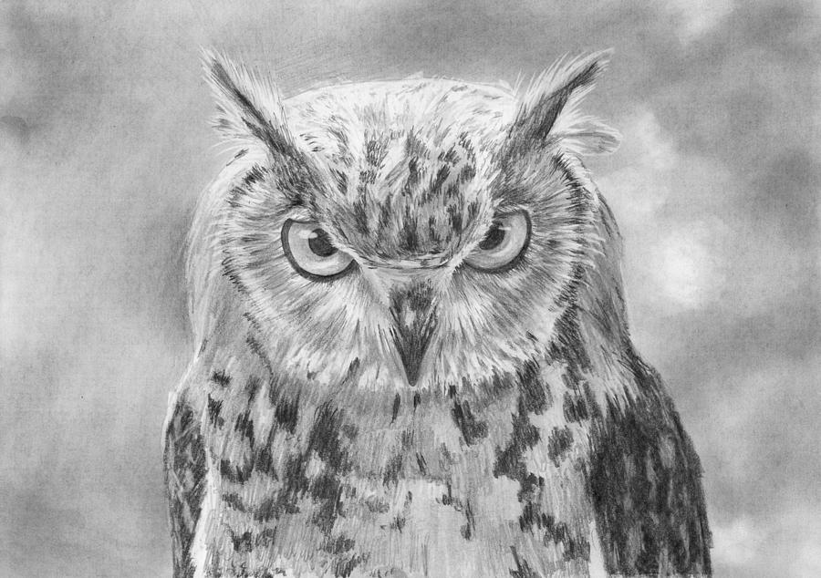 pencil drawing owl portrait by nolan clark