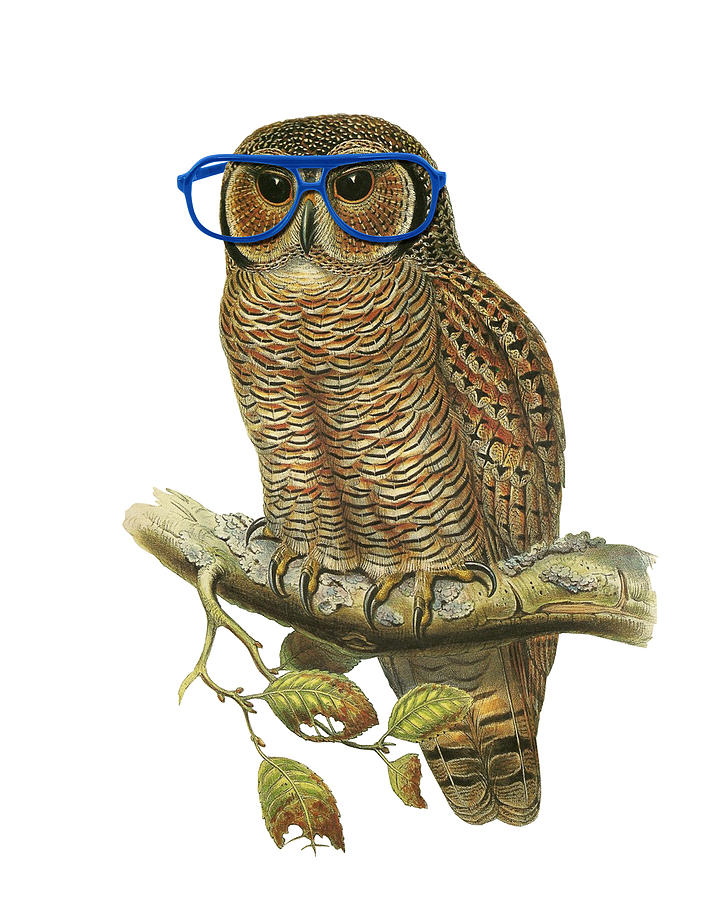 Owl Digital Art - Owl Sitting On A Branch With Blue Glasses by Madame Memento