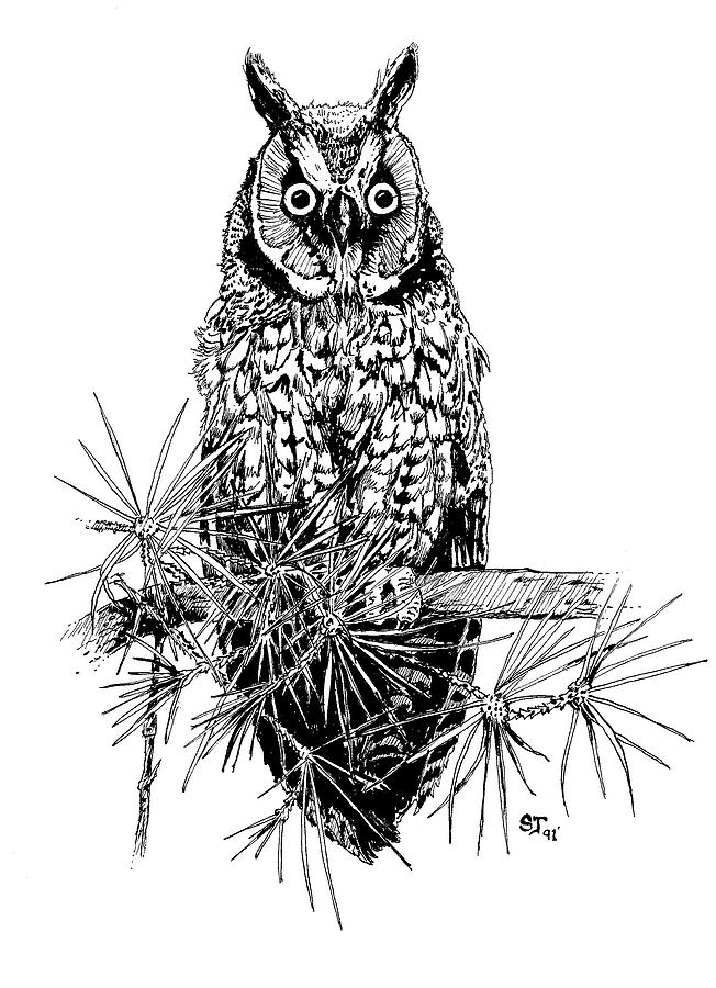 Owl Drawing - owl by Stephen Taylor