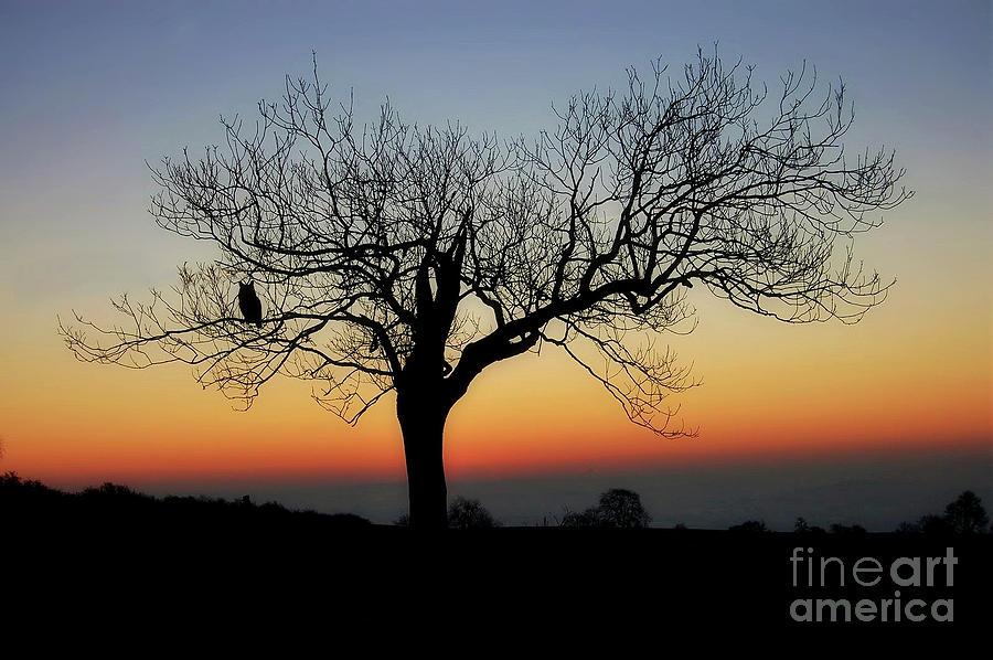 Owl Photograph - Owl Sunset by Anthony Djordjevic