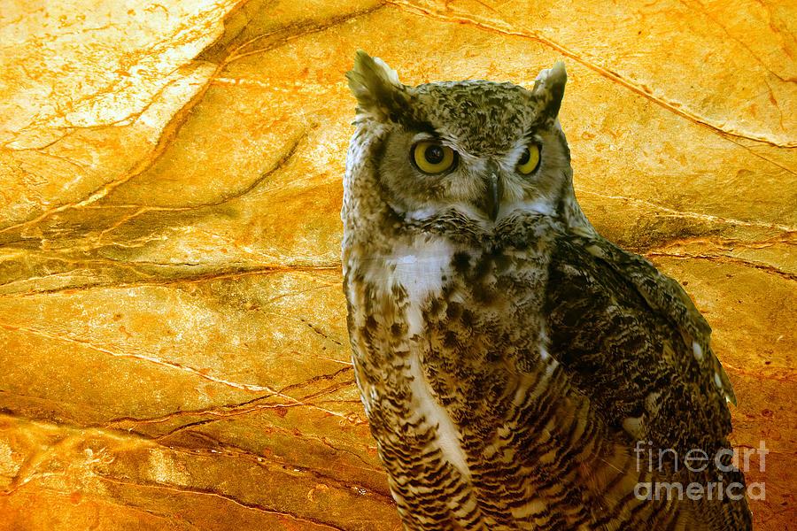 Animal Photograph - Owl by Teresa Zieba