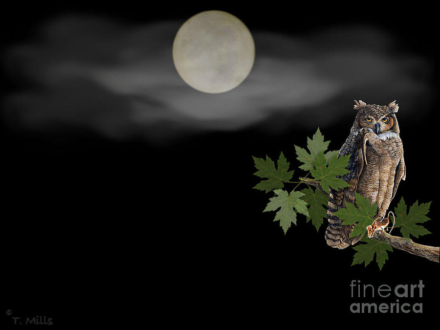 Owl Digital Art - Owl by Terri Mills