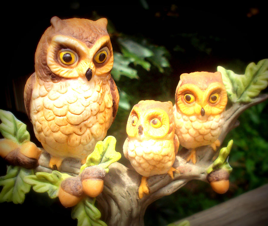 Owl Photograph - Owl Trio by Jennifer Coleman
