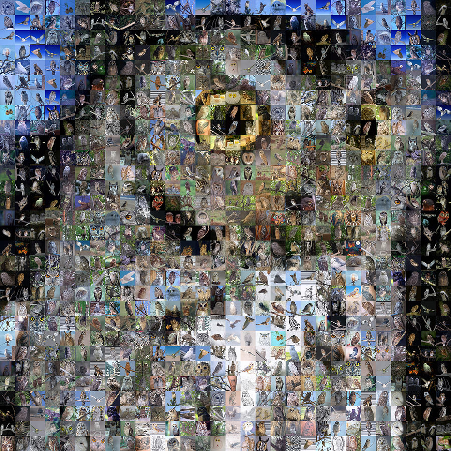 Mosaic Digital Art - Owl With Owls by Gilberto Viciedo