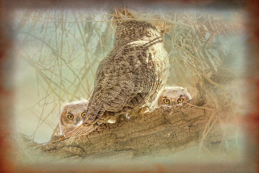 Owlets Peek A Boo by Vicki Stansbury