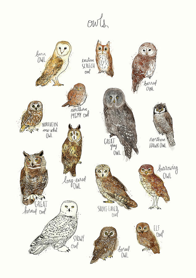 Owl Painting - Owls by Amy Hamilton