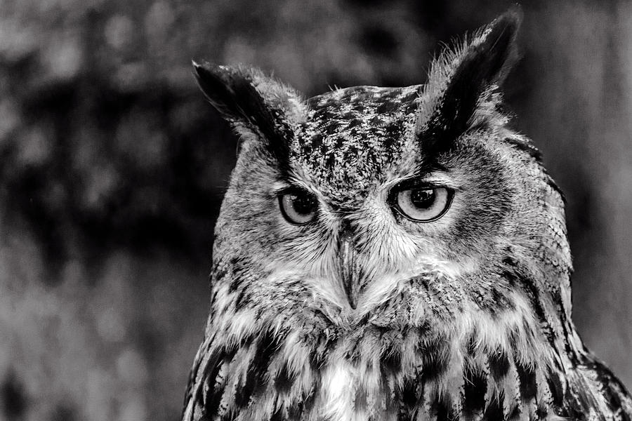 Owls eyes  by Cliff Norton
