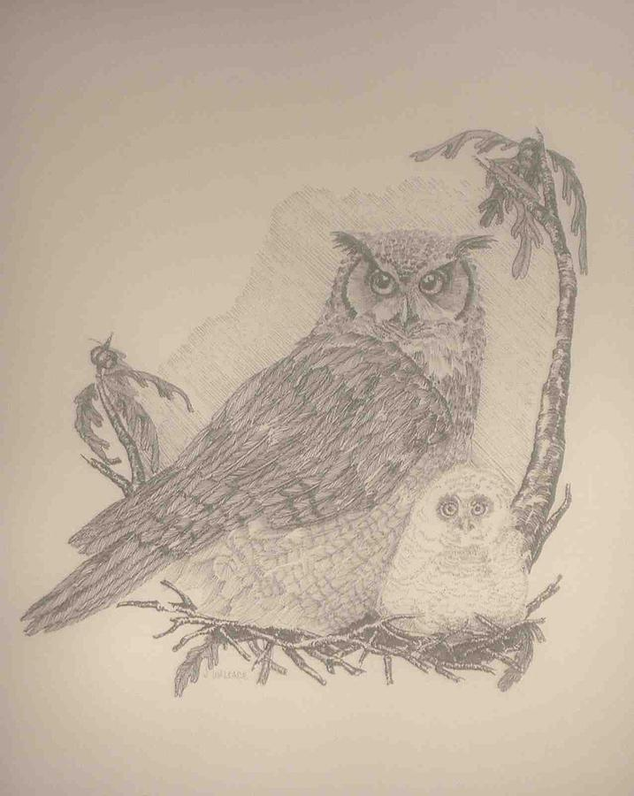 Owls Drawing - Owls by Jane Wallace