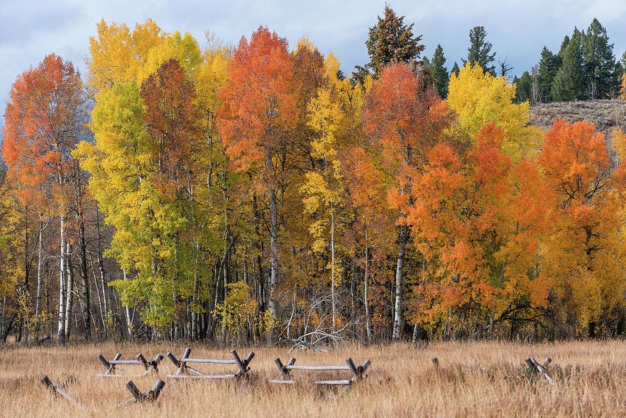 Oxbow Fall Colors by Chuck Jason