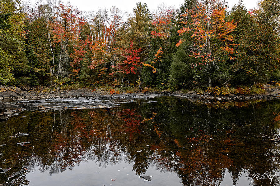 Algonquin Photograph - Oxtongue Shoreline by Phill Doherty