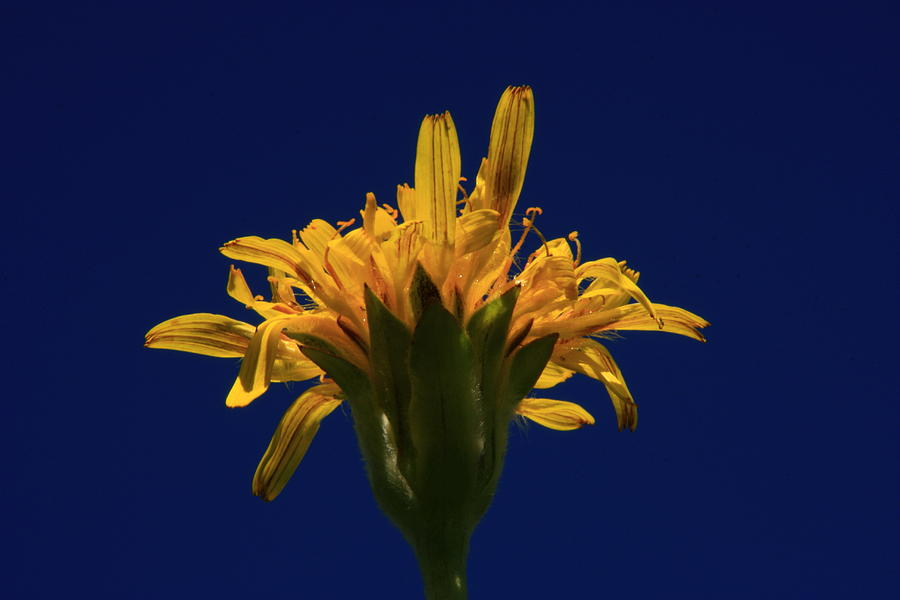 Oyster Photograph - Oyster Plant by Harley J  Winborn