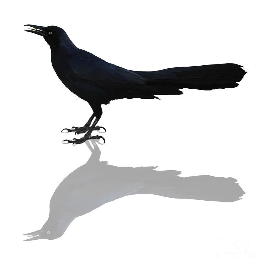 Black Bird Photograph - P M Into The Knight by DiDi Higginbotham