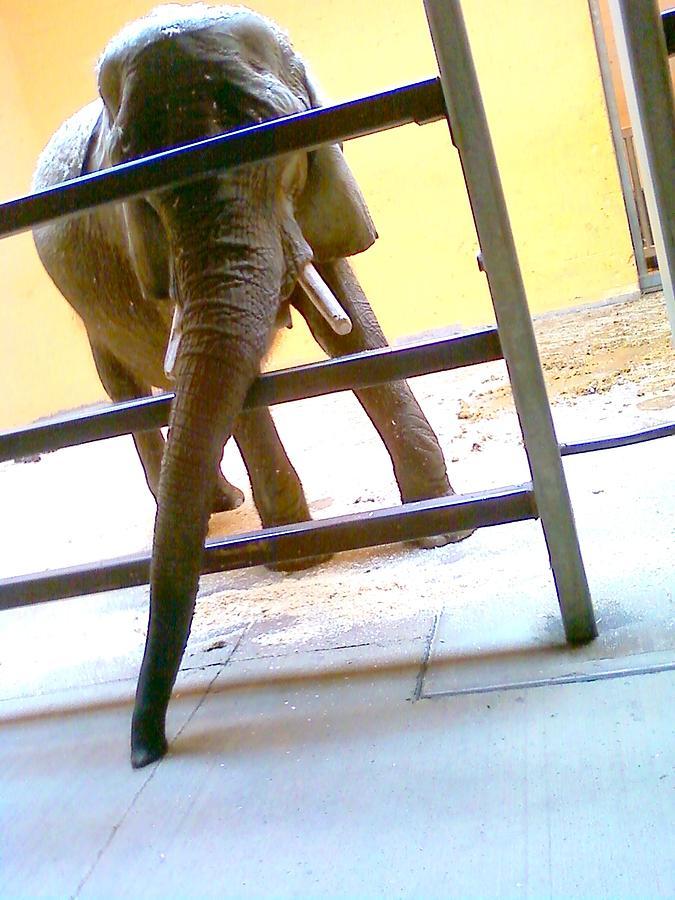 Elephant Photograph - Pachederm Vacuum by Alan Redhorse