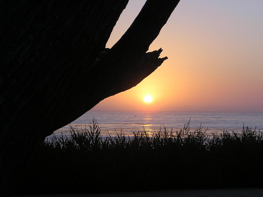 Seascape Photograph - Pacific Cypress Sunset by Richard Mansfield
