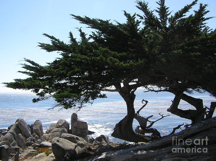 Seascape Photograph - Pacific Cypress View by Richard Mansfield