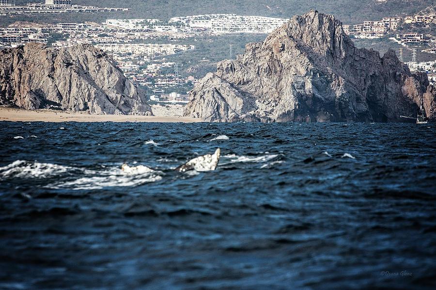 Pacific Rocks of Cabo, MX by Deana Glenz