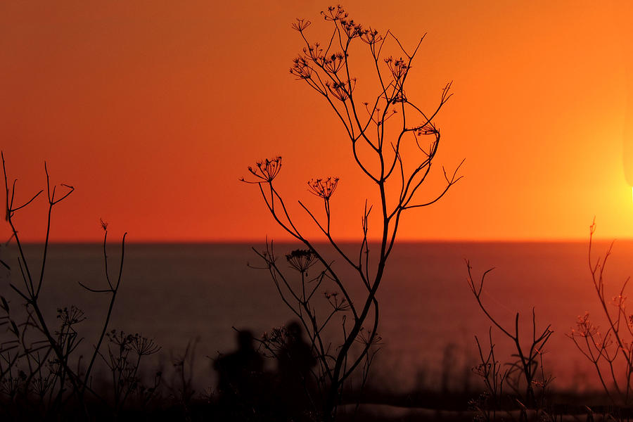 Pacific Sunset Digital Art