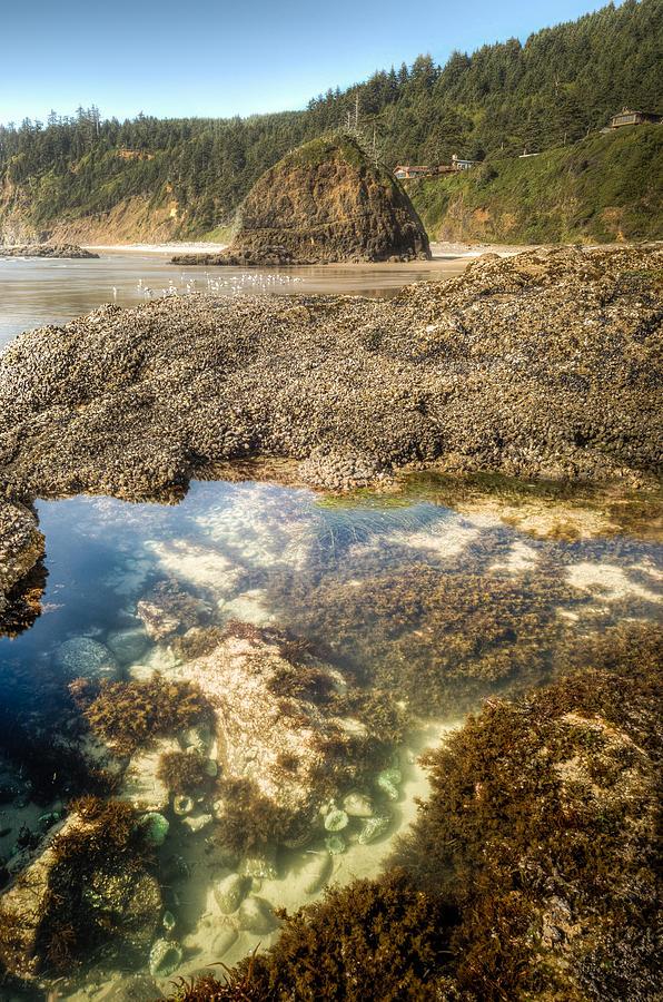 Oregon Photograph - Pacific Tidal Pond by Drew Castelhano