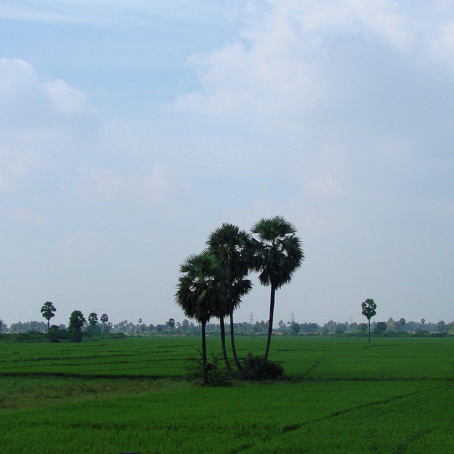 India Photograph - Paddy Fields Near Anantapur, Andhra Pradesh, India by Iqbal Misentropy
