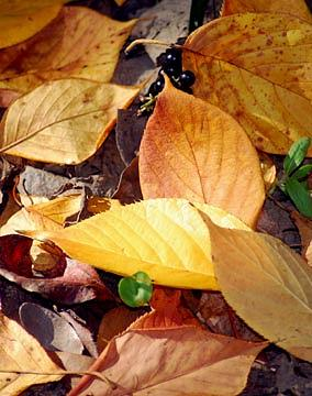 Autumn Leaves Photograph - Paint-by-nature by Linda Jackson
