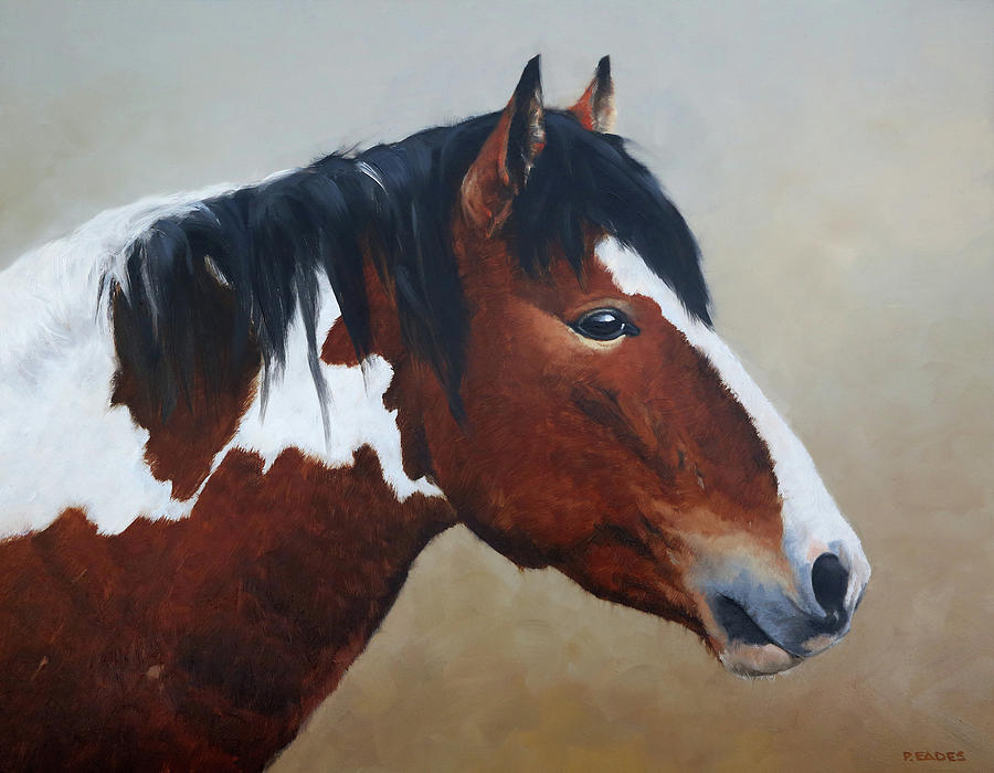 Paint Stallion by Peter Eades