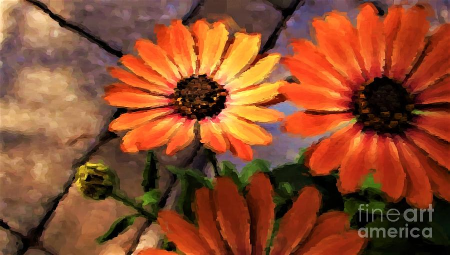 Painted African Daisies Photograph