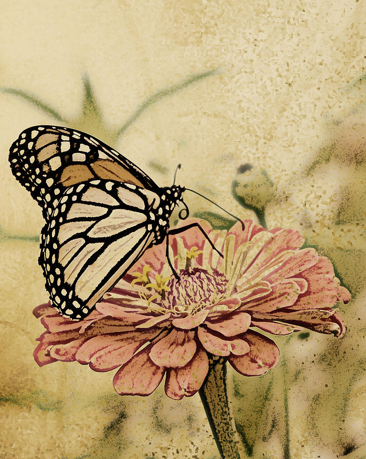 Butterfly Digital Art - Painted Beauty by Sally Engdahl