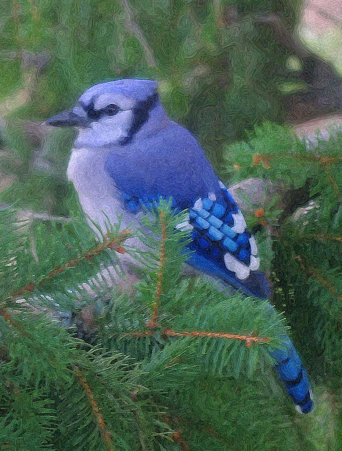 Birds Photograph - Painted Blue Jay  by Thomas  MacPherson Jr