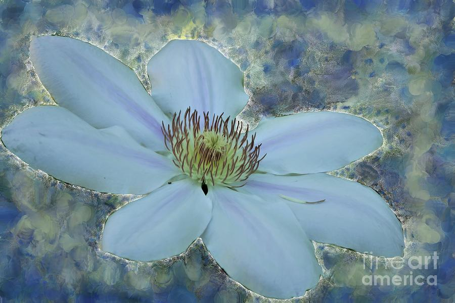 Painted Clematis Photograph