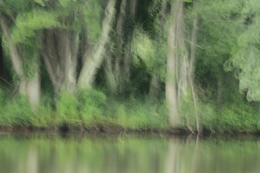 Forest Photograph - Painted Forest  by Karol Livote