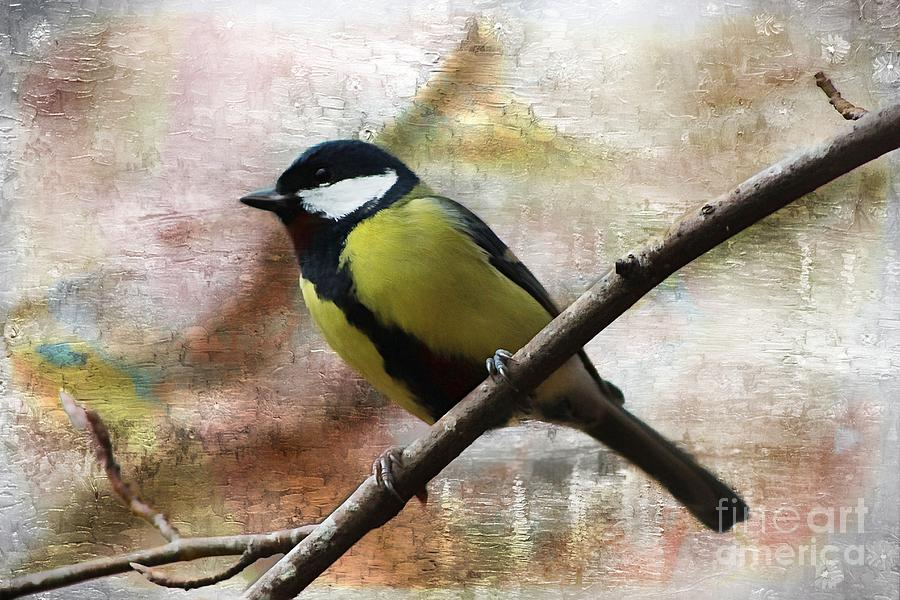 Painted Great Tit by Clare Bevan