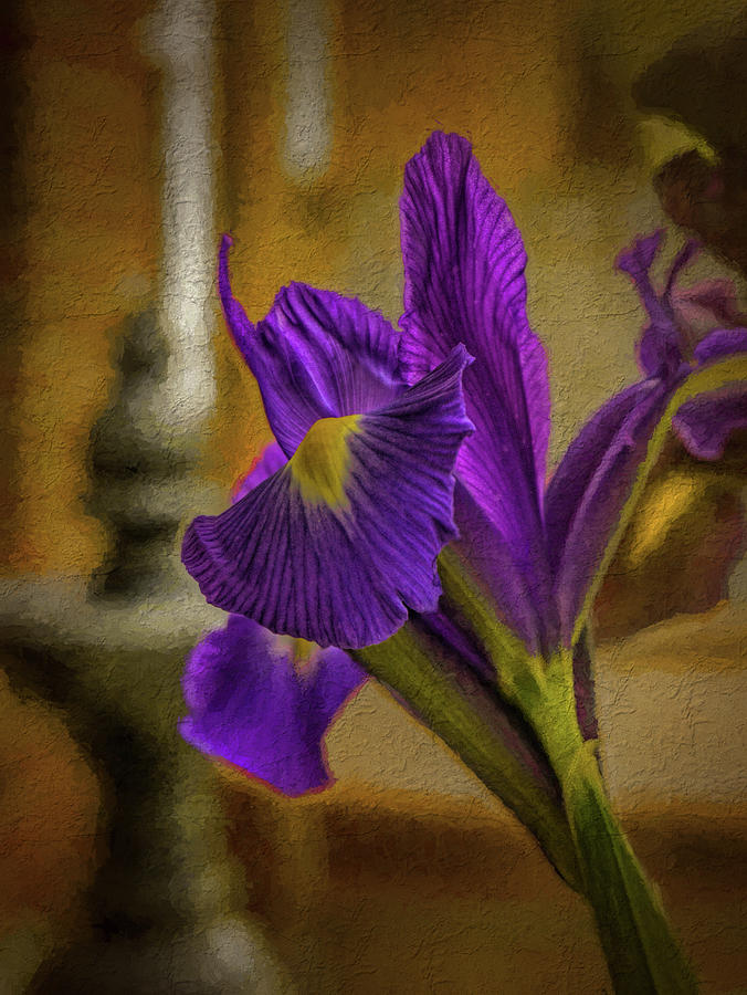 Painted Iris by Dave Bosse