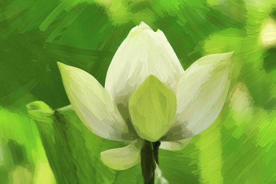 Painted Lotus Photograph