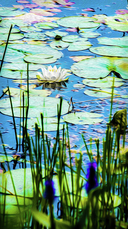Painted North American White Water Lily Mixed Media