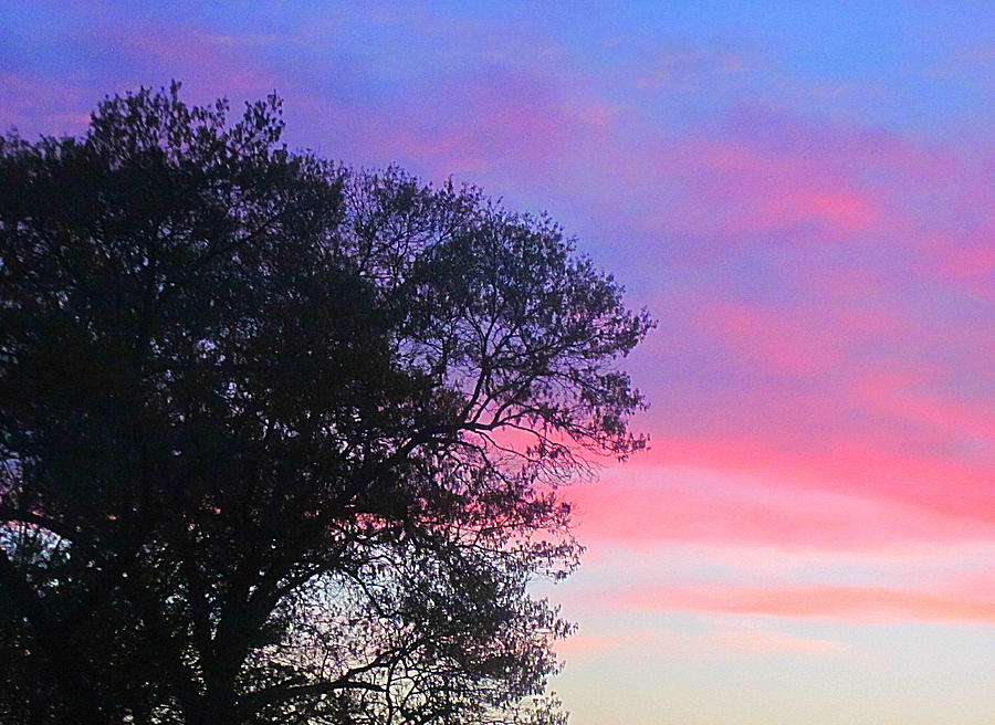 Dusk Sky Photograph - Painted Pink Sky by Guy Ricketts