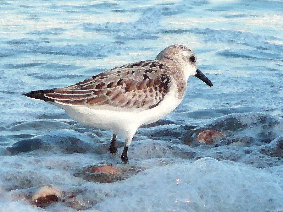 Sandpiper Digital Art - Painted Piper by Margie Avellino