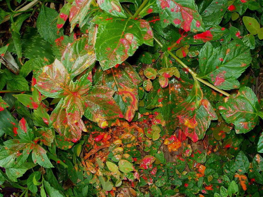 Plants Photograph - Painted Plants by Laurette Escobar