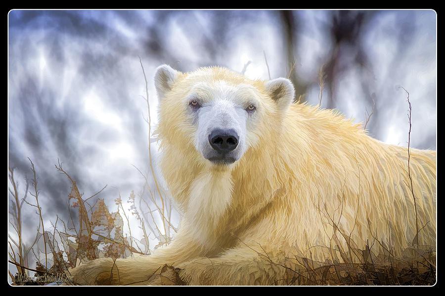 Polar Bear Photograph - Painted Polar Bear  by LeeAnn McLaneGoetz McLaneGoetzStudioLLCcom
