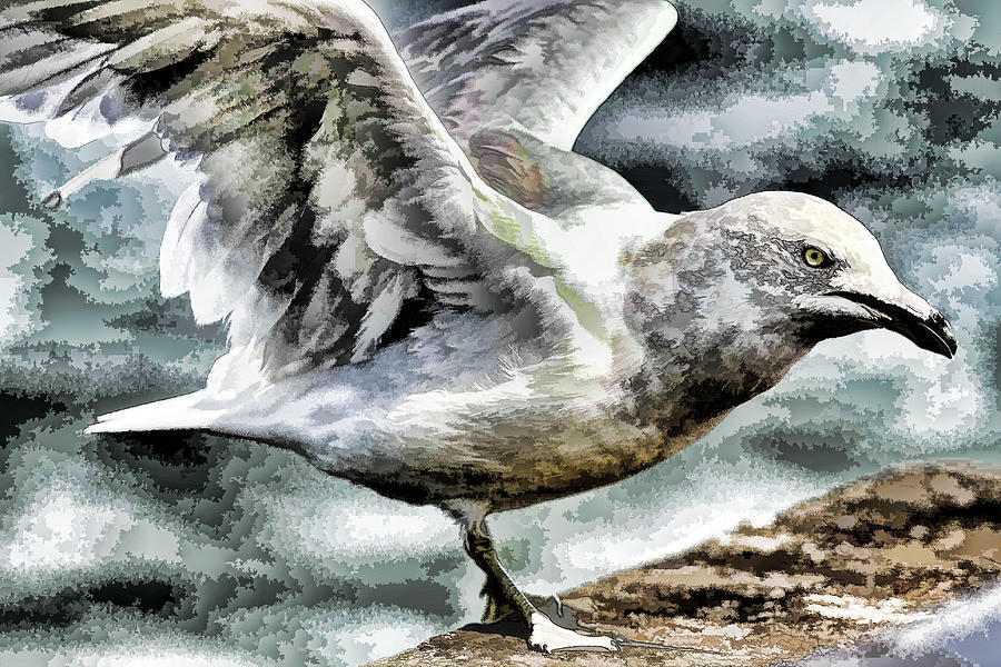 Painted Seagull Photograph