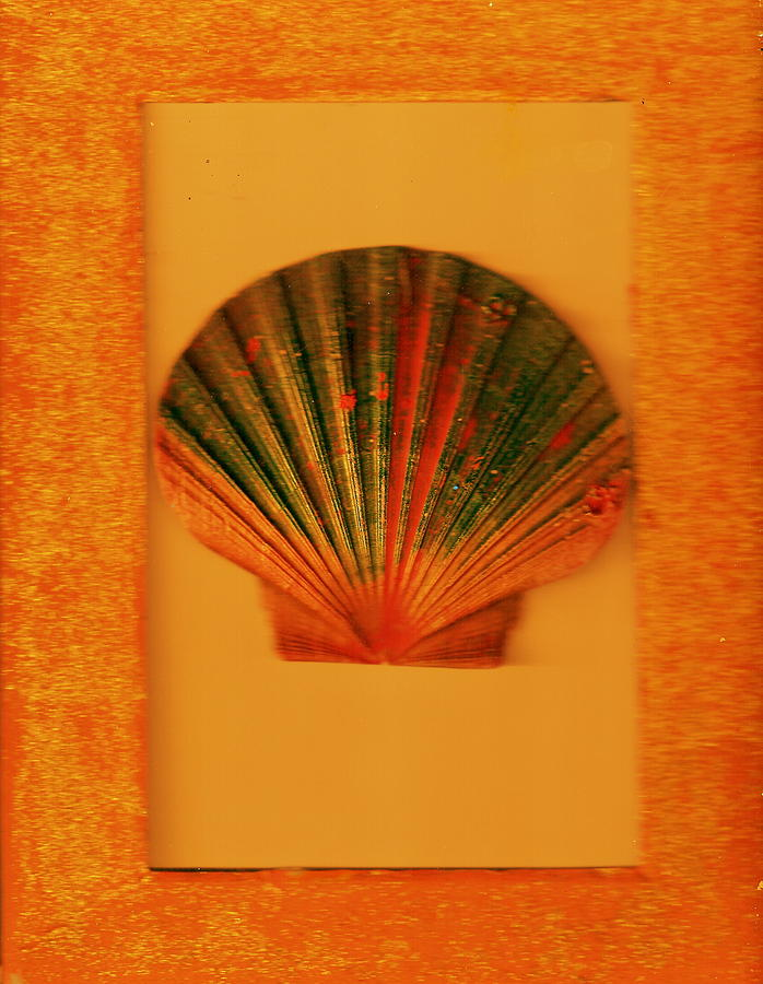 Real Shell Painting - Painted Shell II by Anne-Elizabeth Whiteway