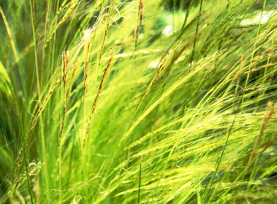 Green Photograph - Painting The Wildgrass by Jean Booth