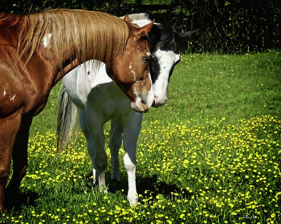 Horses Photograph - Paints And Buttercups by Bill Linn
