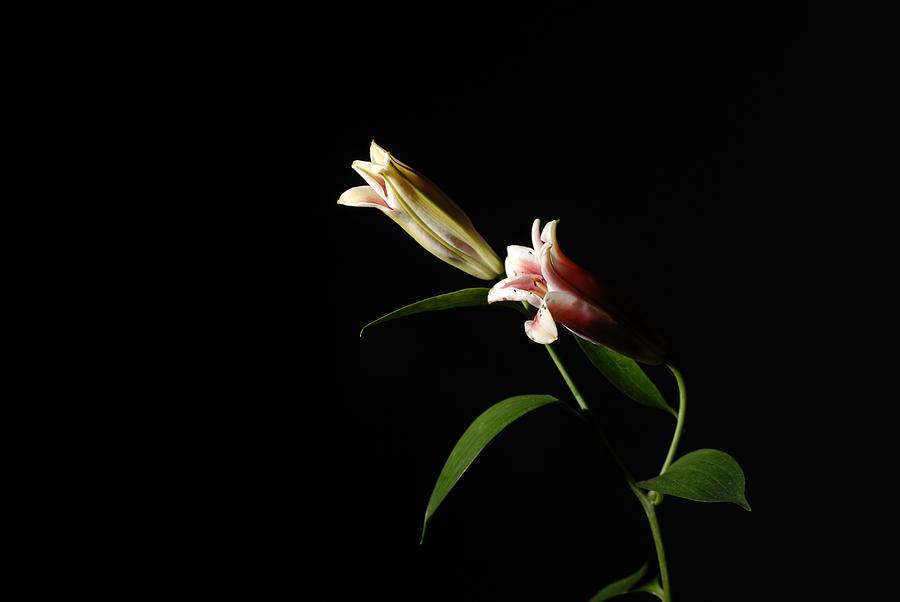 Flowers Photograph - Pair by Deepak Pawar