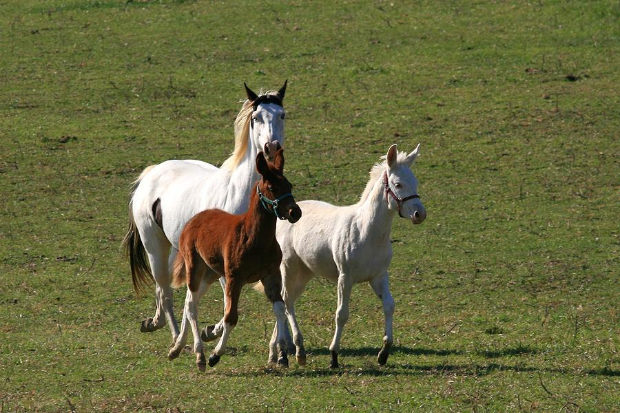 Horse Photograph - Pair Of Jacks Queen High by David Dunham
